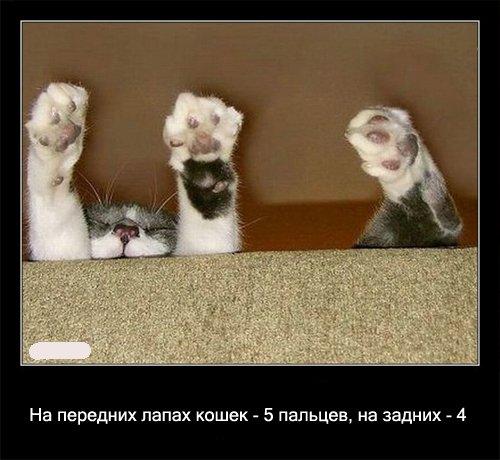 Интересные факты о кошках ))))