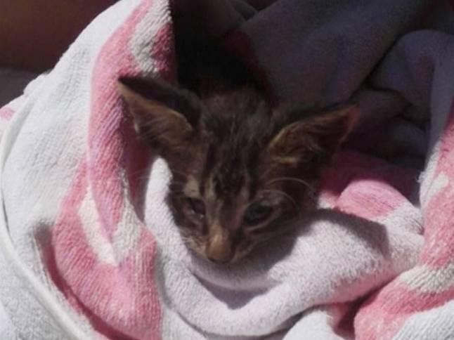 Возвращение к жизни утонувшего котенка — малыша спасали всем миром