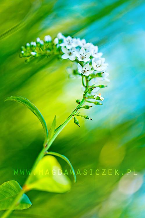 Сила красок и цветов. Магдалена Васичек