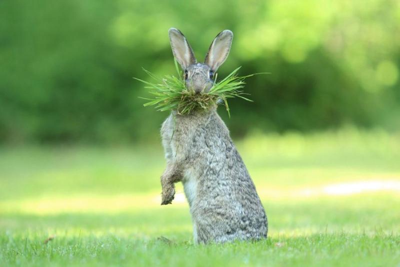 33 победителя конкурса смешных фотографий дикой природы.