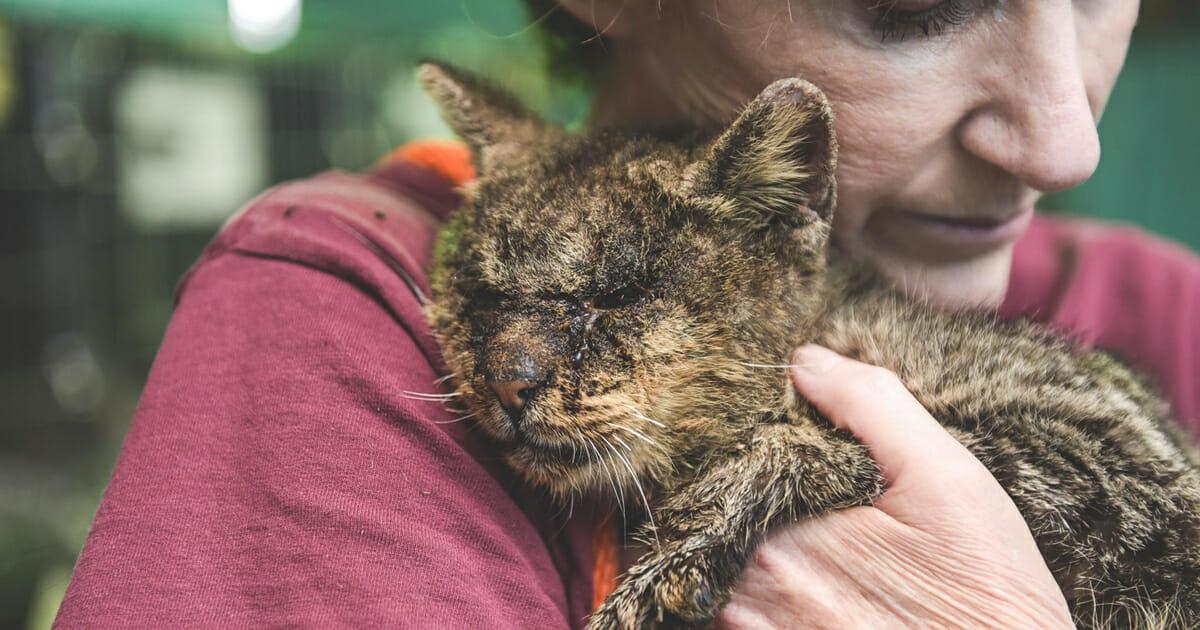 Кот, которого все избегали, безгранично благодарен объятиям