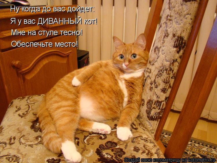 Анекдот рыжий кот