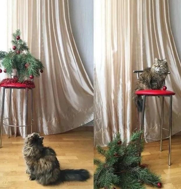 Пушистые засранцы: 15 фото, которые доказывают, что кошки всегда делают то, что они хотят