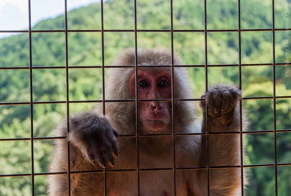 Прогулка по бамбуковому лесу и парку обезьян