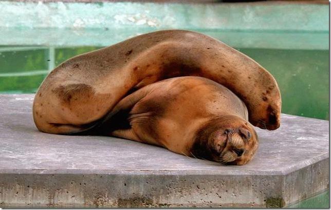 animals_sleep-35