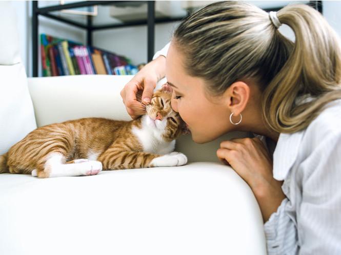 7 фактов о женщинах и кошках