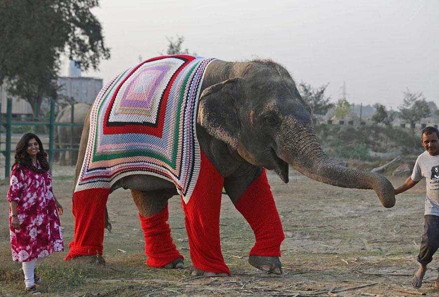 Тепло людских сердец: волонтёры вяжут огромные свитера, чтобы согреть слонов в непогоду