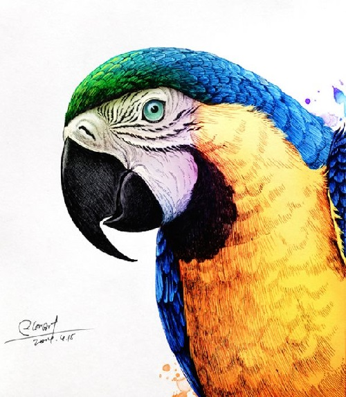 Macaw. Realistic Illustrations by RLoN Wang