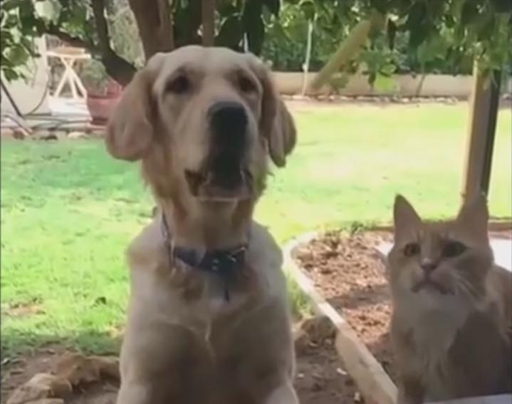 Кот, пес и картошка фри. (прикольное видео)