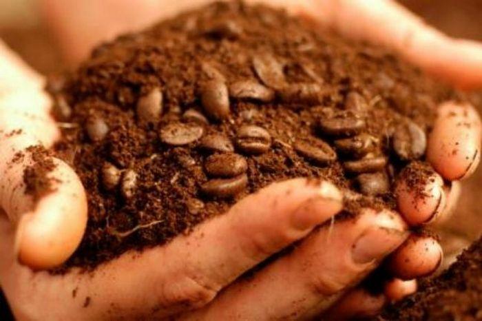 Кофейная гуща на все случаи жизни: 14 вариантов использования