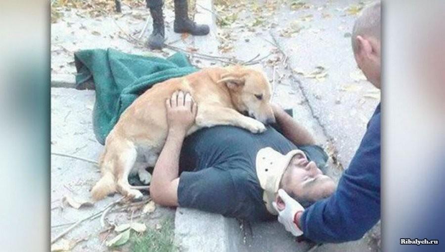 Собака поддерживала упавшего с дерева хозяина до приезда скорой
