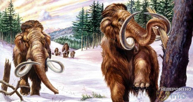 Осторожней на лесных дорогах, могут встретиться мамонты!