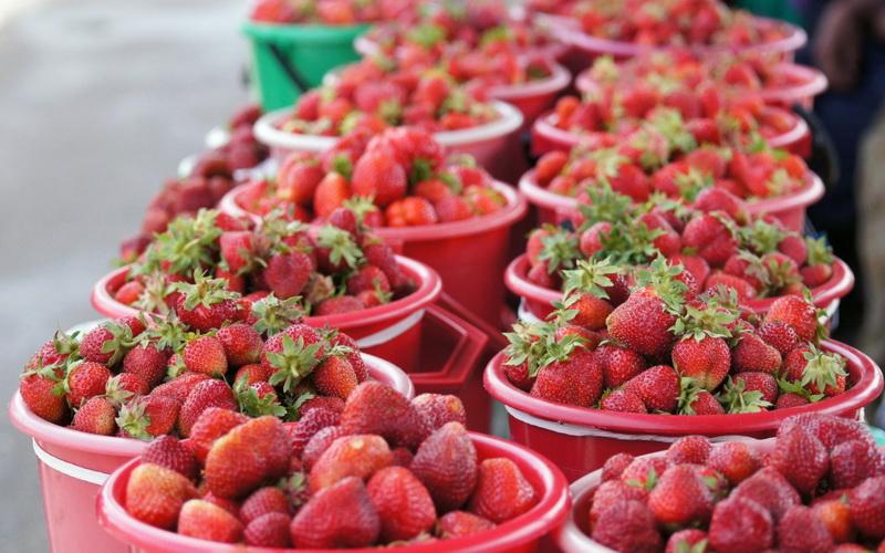 Как выращивать клубнику и ухаживать за ней в июне