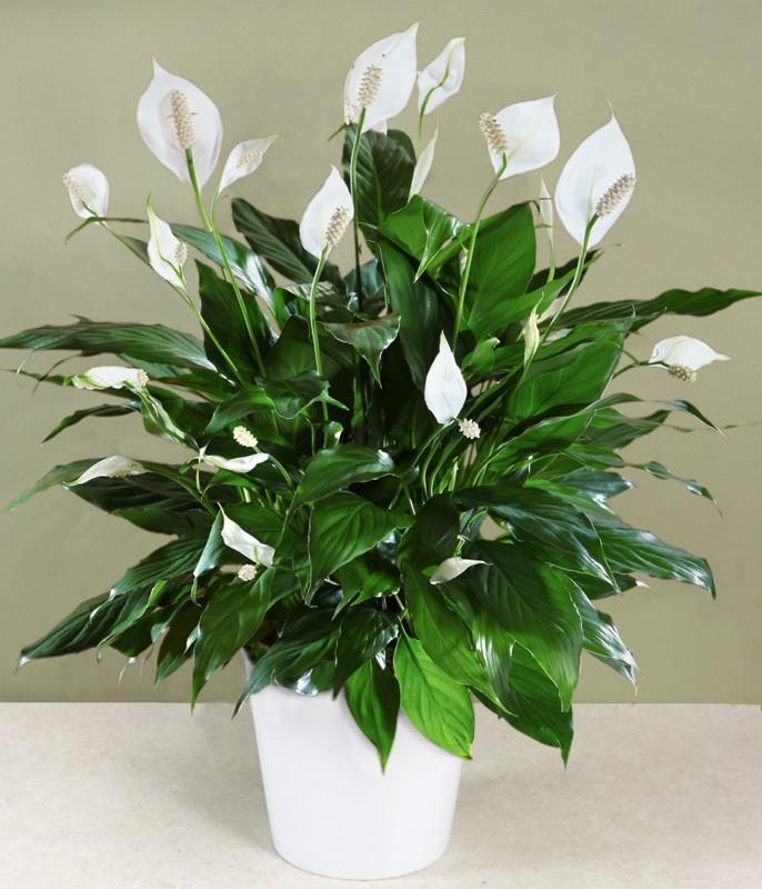 4 растения, которые обязательно должны быть в вашем доме