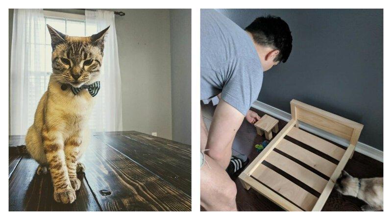 Наши руки не для скуки: королевское ложе для кота