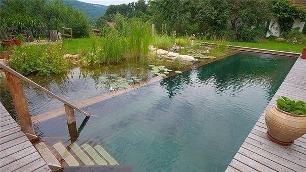 Самоочищающийся пруд. Растения для биотопного водоема.