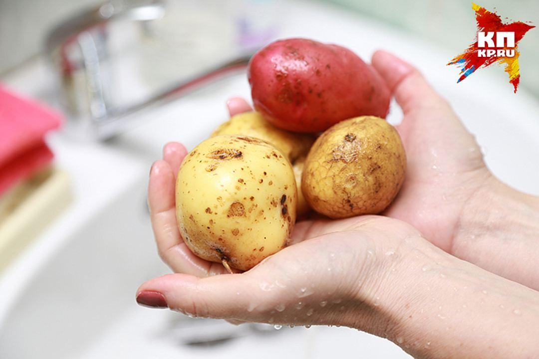 Своя картошечка, даже если не дешевле магазинной выходит, все равно рассыпчатей и слаще Фото: Мария ЛЕНЦ