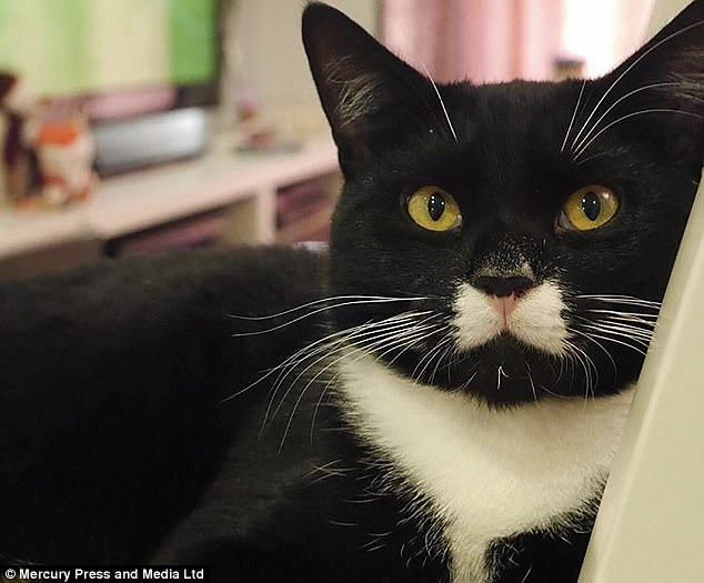 Bugsy the cat looks like he's permanently wearing a tuxedo thanks to his perfect bow tie-shaped marking