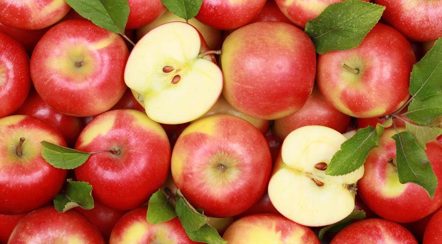 Яблочный пирог (можно хоть каждый день)