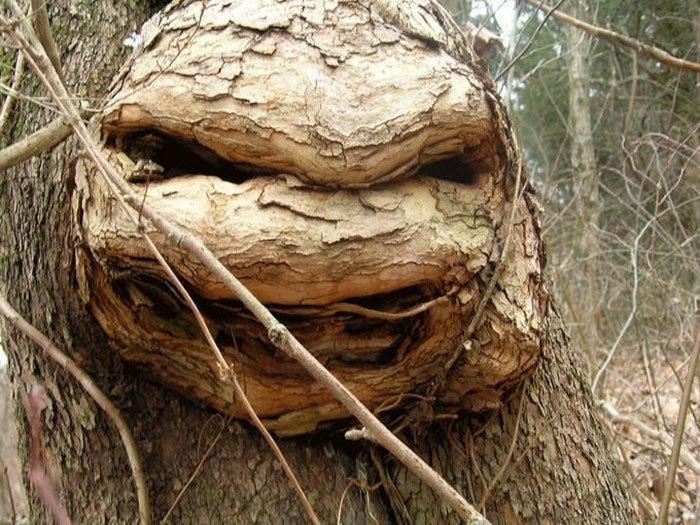 11. Злая черепашка ниндзя дерево, деревья, обман зрения, парейдолия, похоже да не то же, похоже на, похоже на лицо