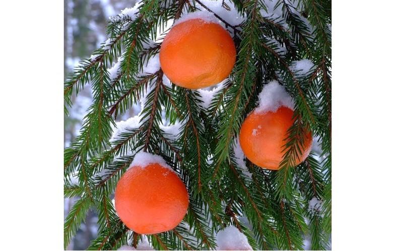 Вкус апельсинов