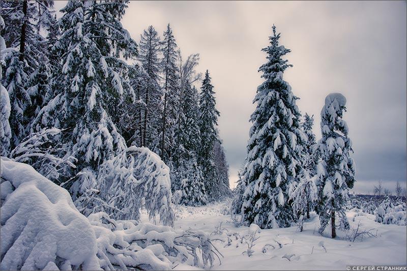 Фото Гжель Опушка леса зимой