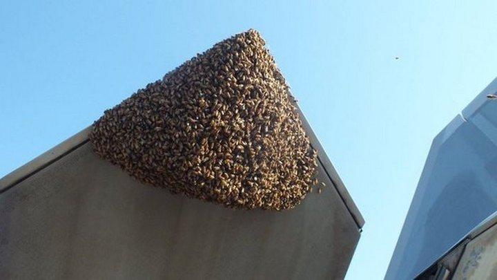 Пчёлы поселились на истребителе F-22 Raptor