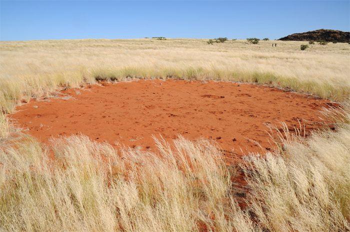 Ведьмины кольца: откуда круги в пустыне Намиб