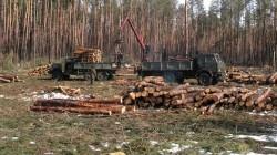 """Варварская вырубка лесов на Украине """"выходит боком"""" и нам, и Европе"""