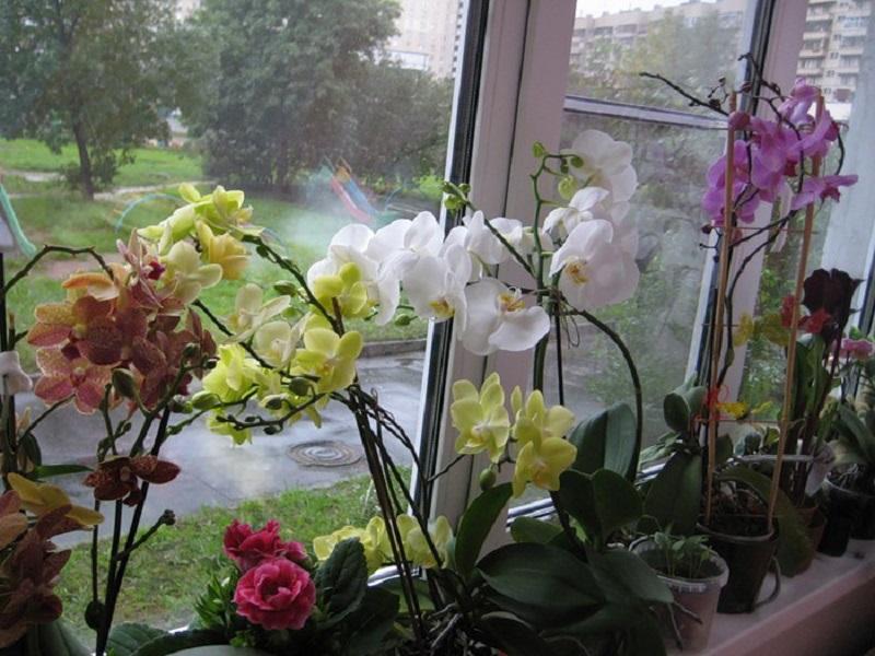 Настоящая находка для всех любителей орхидей
