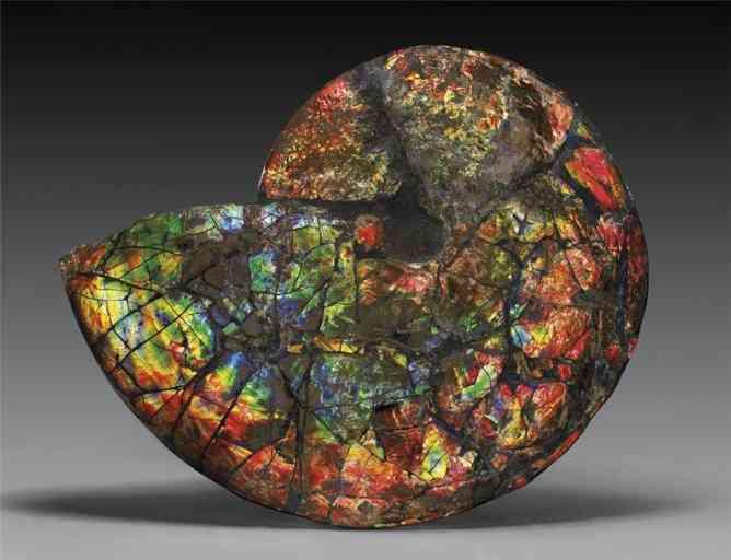 Камень: форма разумной жизни?