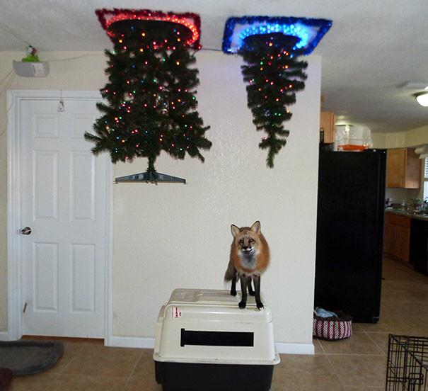 Если в доме живет лиса  елка, животные, защита