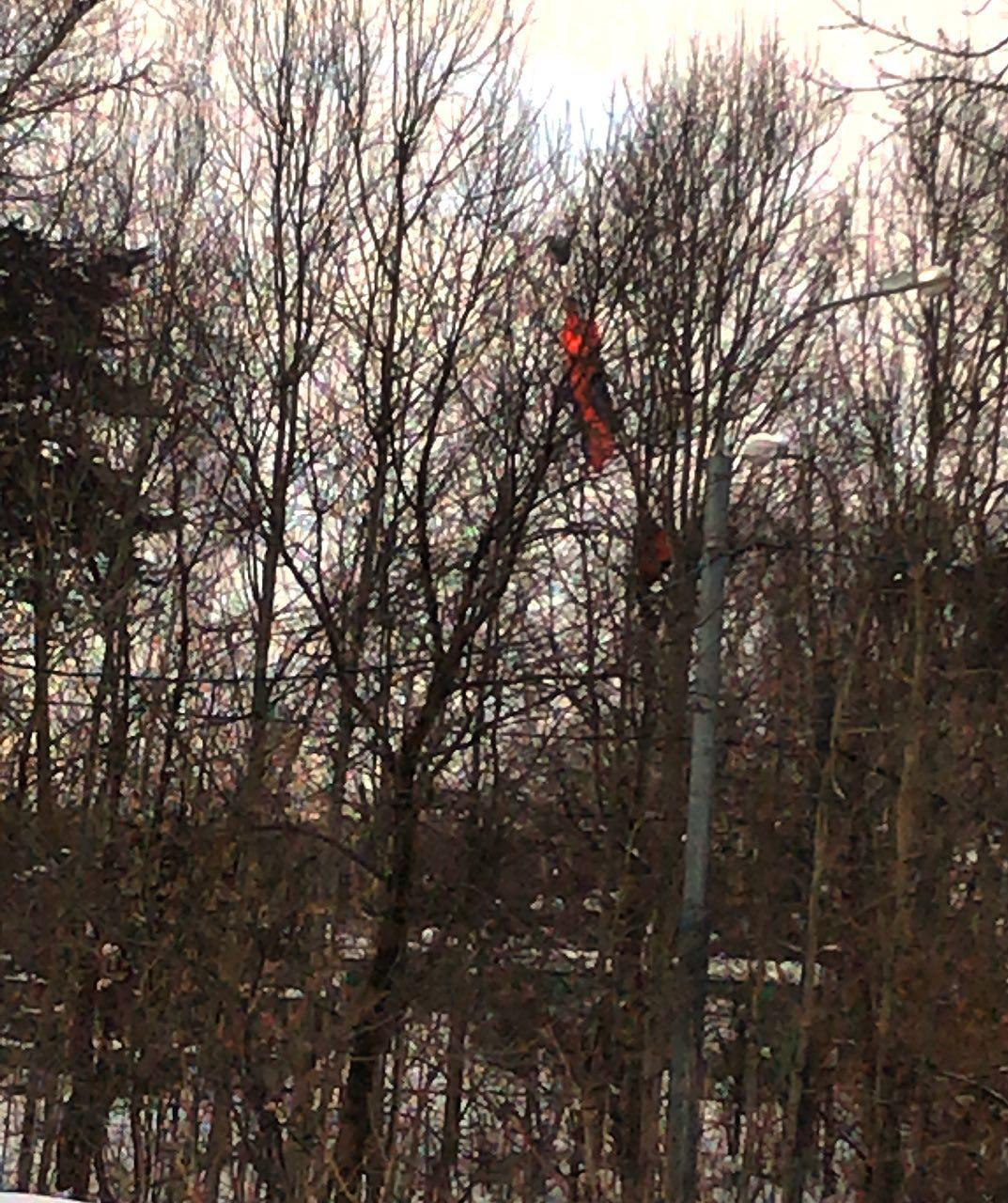 Видите оранжевую тряпочку на дереве?