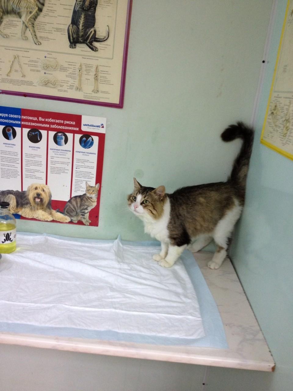 Помогите пожалуйста долечиться и передержать до октября котика Бориса после травмы глазика. Или сразу хозяин найдется.