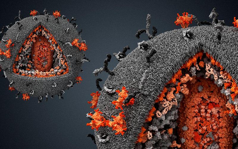 Что говорит наука о коронавирусе