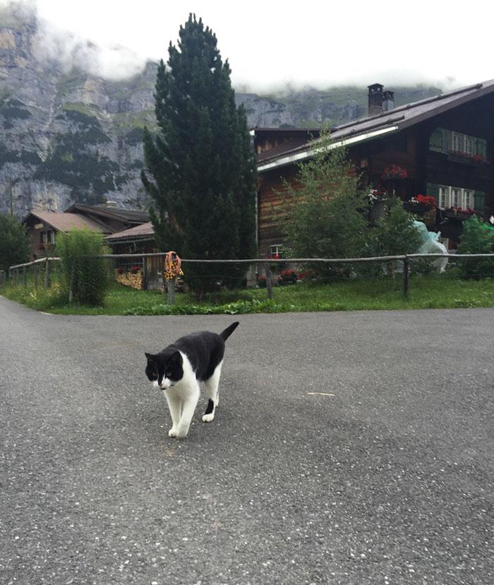 cat-guide-man-mountain-gimmelwald-switzerland-4