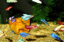 Сколько рыб помещается в аквариуме?