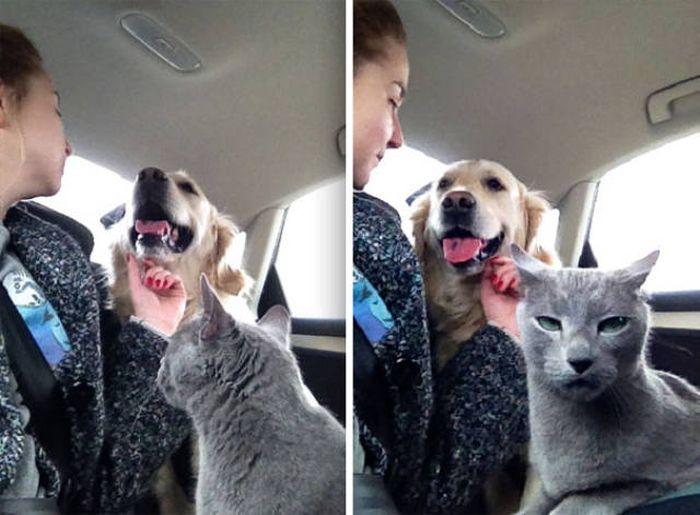 Как кошка с собакой (забавные и очаровательные фото)