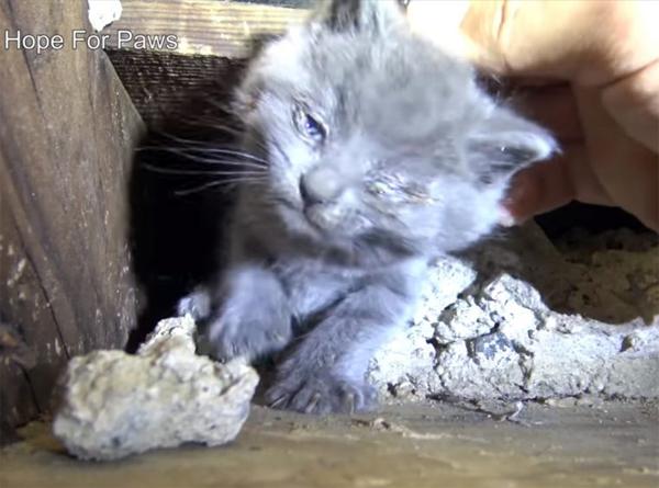 Спасение маленьких котят, рожденных под лестничной клеткой