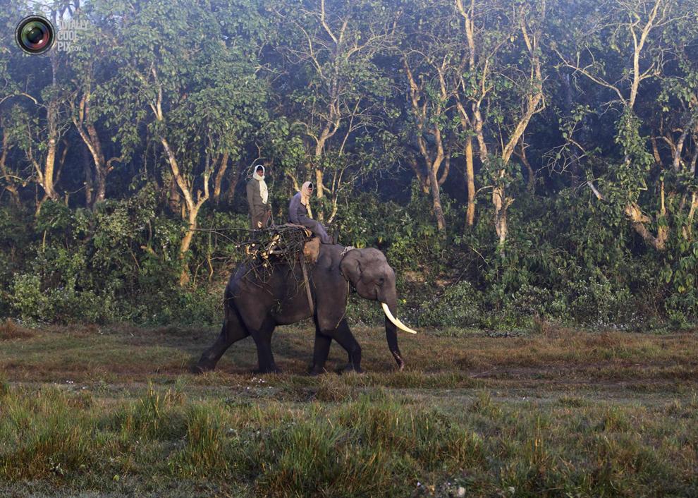 elephants 007 Слоны в национальном парке Читван