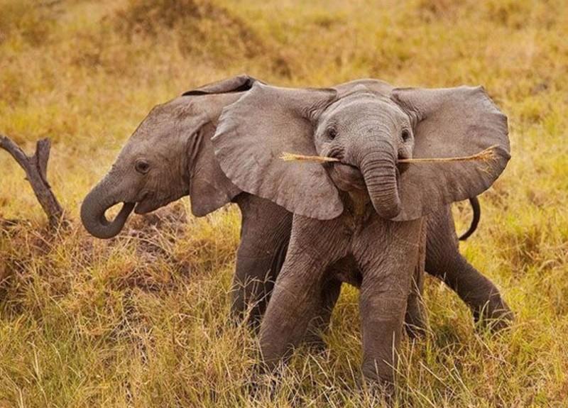 70 очаровательных слонят, которые подарят вам улыбку