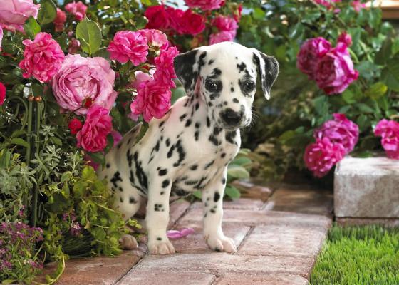 В определенных обстоятельствах даже собаки могут быть смертельно опасны