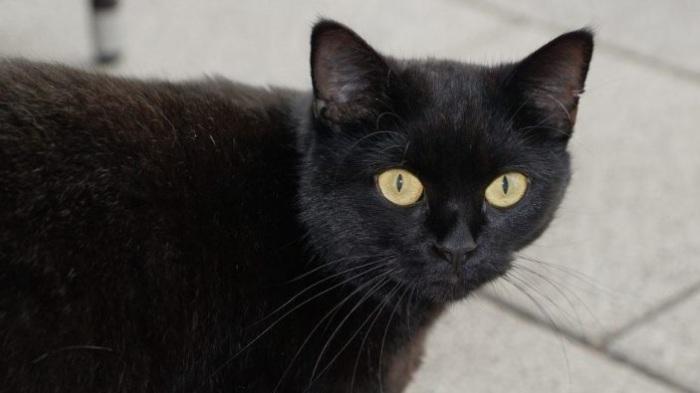 Отношение к черным кошкам в разных странах