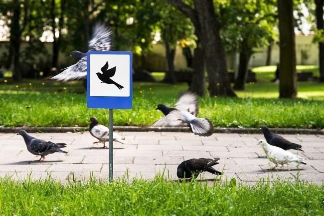 «Аэропорт для птиц» в Вильнюсе доброта, животные, мир