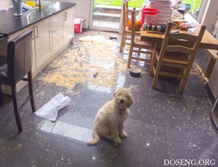 Когда твоя собака — монстр с…