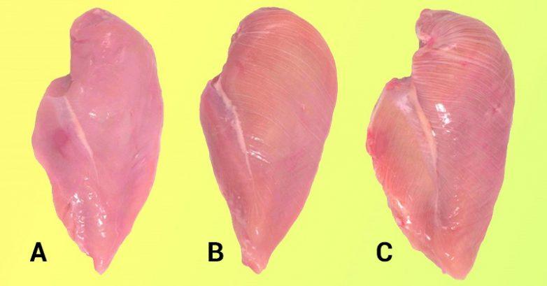 Как выбрать правильную куриную грудку