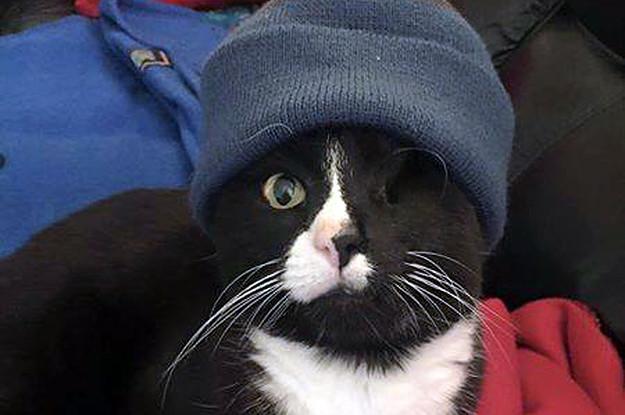 Этот кот - воплощение воли к жизни!