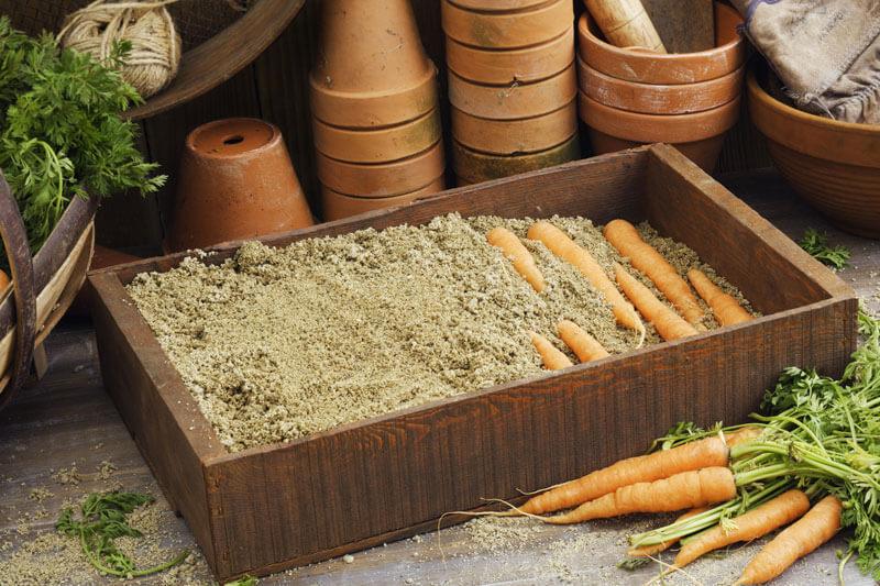 Как правильно хранить морковь: 8 способов