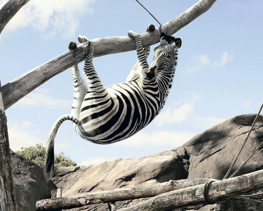 grey О животном страхе