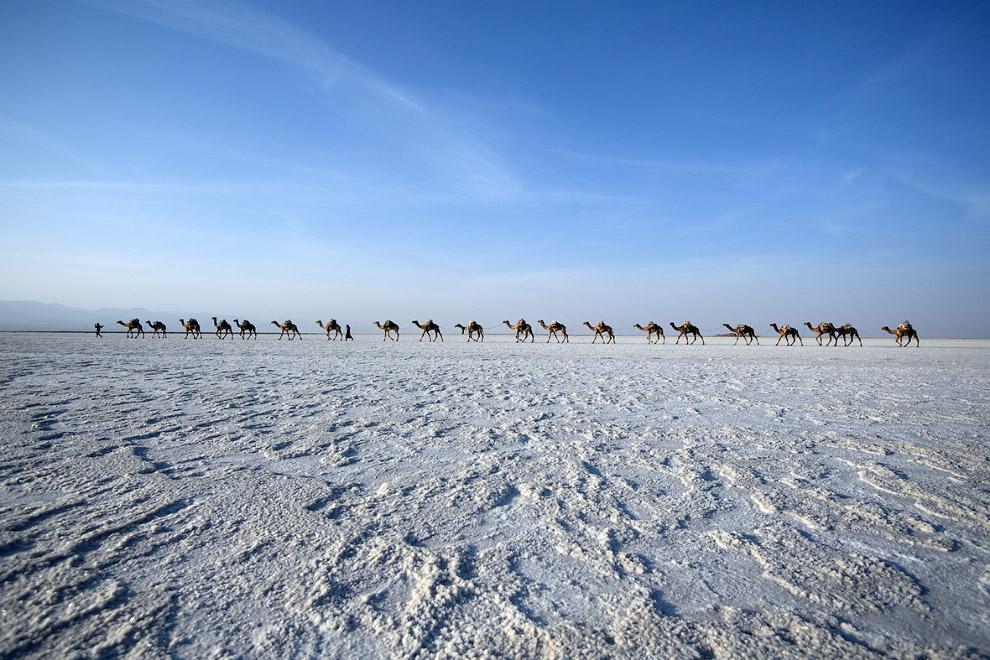 Где находится самое теплое место на Земле?